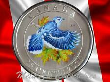 2010 BLUE JAY - BIRDS OF CANADA SERIES-  BEAUTIFUL COLORED 25 CENT COIN