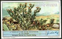 Opuntia Cactus Flower Blossom Plant 1930s Trade Ad Card
