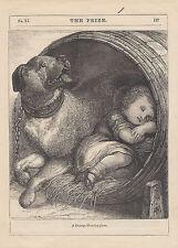 Early Mastiff Dog Watching Over Sleeping Boy Mastiffs Antique Print 1886