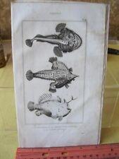 Vintage PRINT,FISH,1836,Comte De Lacepede, p1098