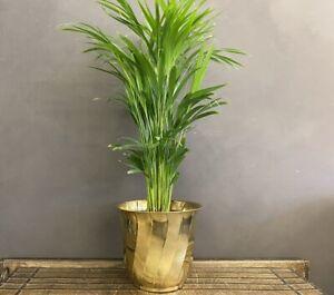 NEW Brass planter , princy - Large