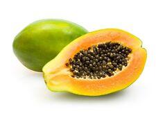15 Semillas - Papaya - CARICA PAPAYA - Fruta Árbol Frutal - Jardín - Samen Semi