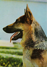 Carte postale CHIEN Berger allemand, portrait profil +FOTOCOLOR KODAK EKTACHROME