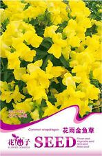 Original Package 60 Yellow Common Snapdragon Seeds Flower Rain Antirrhinum A182