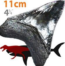 MEGALODON shark tooth replica fossil GREAT SERRATIONS : GREAT TIP : GREAT GIFT