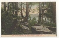 Lake from Fat Man's Squeeze EAGLES MERE PA Vintage Sullivan County Postcard