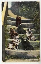 SIX DOGS - A Capital View - Raphael Tuck Puppydom #8104 - 1913 used postcard