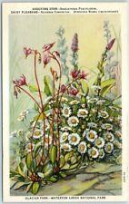 "1940s Glacier Park Waterton Lakes National Park Postcard ""SHOOTING STAR"" Flower"