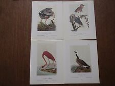 Lot of 40 Vintage Audubon Bird Prints - Ibis Egret Heron Flamingo - 5