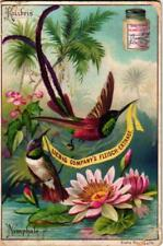 6 cards complete litho set VG c1897 Exotic birds & flowers tucan colibri orchids