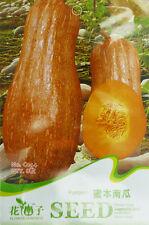 8 Original Pack Seeds Sweet Pumpkin Seeds Cucurbita Moschata Organic C044