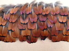 "100 Cock Pheasant Neck Feathers 1"" - 2"" - Crafting, Jewellery Making"