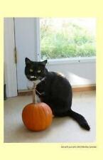 Cats of Ralphie's Retreat: Cat with Pumpkin 2014 Weekly Calendar : A Week by...