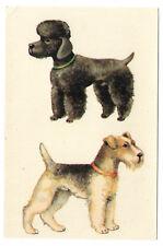 Estampado, schiebebild perros motivo 1130, rda 1985