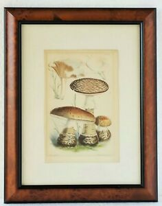 Antique Lithograph Print 19th C Walter Fitch Vincent Brooks Mushrooms Botanical