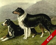 THE ALERT PAIR OF SHEEP DOGS PET DOG ANIMAL ART PAINTING PRINT ON REAL CANVAS
