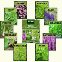 1100Pcs Combo Mix Spice Seeds Medical Rare Herb Plants Complete Set Whole Seed