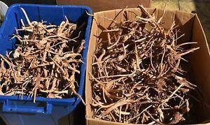 CHEAP AQUARIUM WOOD PIECES 20cm+ Red moor root fish tank bogwood moss java fern