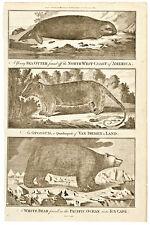 c. 1781, Illustration Print About Captain James Cook