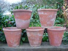 """5 Old Hand Thrown Sankey bulwell terre cuite plantes en pots de 5.5"""" de diamètre (1127)"""