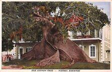 Nassau Bahamas Silk Cotton Tree Postcard c1930s Quantiy Printed & Item Number