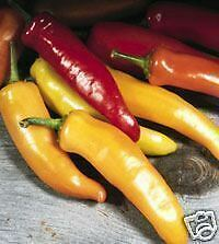 PIMIENTO HUNGARIAN WAX pepper  500 Semillas Seeds