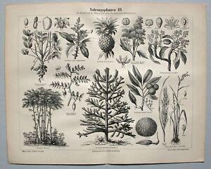 Nahrung, Lebensmittel, Nahrungspflanzen - Sammlung 10 Holzstiche 1890-1905