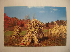 Vintage Photo Postcard Corn Field Indianola Iowa Unused