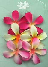 FRANGIPANIS Petals 6 Pk - PINK & CREAM - 2 Toned Mixed 6cm across Green Tara