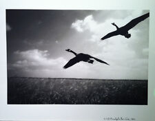 Fine Art Photography - Canada Geese - Signed AP - Silver Gelatin Print