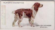 English Springer Spaniel Dog Canine Pet 1920s Ad Trade Card