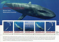 Netherlands 2017 MNH Endangered Mammals Blue Whale 5v M/S Whales Stamps