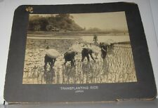 ANTIQUE PHOTO - TRANSPLANTING RICE - JAPAN - STAMPED THE PHILADELPHIA MUSEUMS