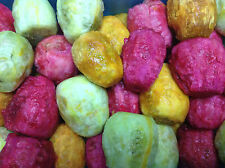 3000 Bulk FRESH MIX Prickly pear / Opuntia Ficus Indica seeds All 3 Varieties