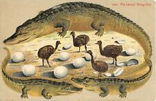 c.1908 Alligator Border Latest Thing Out Baby Ostriches Fl post card