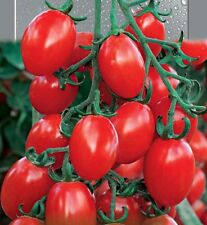 Tomato Seeds Cherry Yubbi Breakfast in Britain Vegetable Seeds / 75 SEEDS