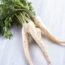 Root Parsley Half Long - Min 6000 seeds - Vegetables / Fruits