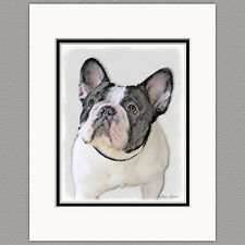 French Bulldog Frenchie Brindle Pied Original Art Print 8x10 Matted to 11x14