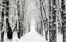 Lámina-Cazadores De Captura camino a través de la Alaska Forest (imagen Cartel