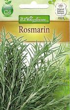 4974 Chrestensen Rosmarin immerkrüner Kleinstrauch mehrjährig Samen