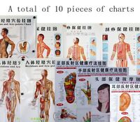Healthy human body acupuncture point chart TCM chinese medcinice Ear foot hands