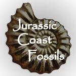 Jurassic Coast Fossils