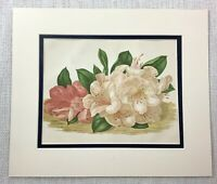 1877 Antique Botanical Print Auckland Rhododendron Flowers Floral 19th C Plants