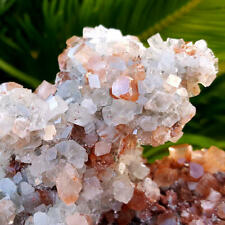 VERY FINE WORLD CLASS 6 1/4 INCH BI COLOR ARAGONITE CRYSTAL CLUSTER