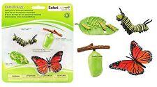 S622616 Safari Wissenschaft - Lebenszyklus eines Monarchfalters (Set)