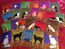 Cat Color Fortune Cards ( Tarot Oracle psychic superstition )