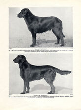 FLAT COATED RETRIEVER TWO NAMED DOGS OLD ORIGINAL DOG PRINT PAGE FROM 1934