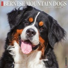 Just Bernese Mountain Dog 2022 Wall Calendar (Dog Breed) (Free Shipping)