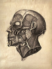 Framed Vintage Medical Print – Muscles Human Face (Picture Poster Art Anatomy)
