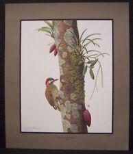 "Don Richard Eckelberry ""Golden-Olive Woodpecker"" Signed Art Print 26""x22"""